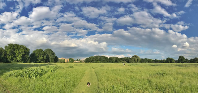Wimbledon and Putney Commons Conservators September Board Update